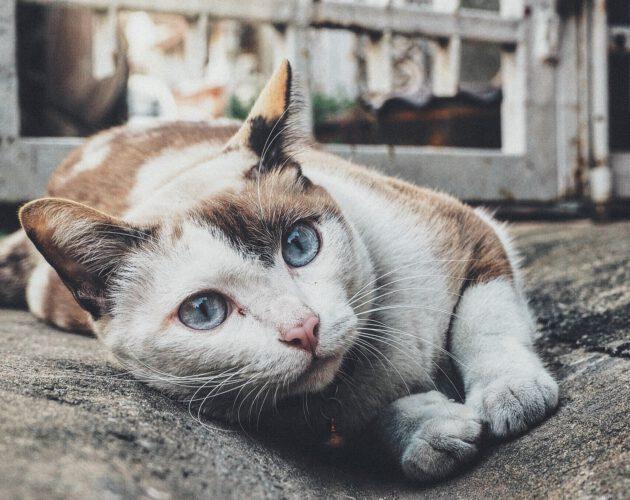 Zdjęcie wyróżnione wpisu - Karmisz dzikie koty – gmina da Ci karmę!