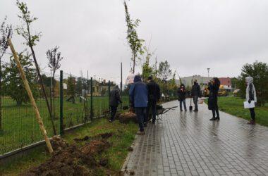 Tarnogórzanie przy sadzeniu drzew