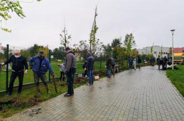 Grupa osób sadzących drzewa