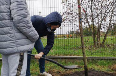 Dwie osoby sadzą drzewo