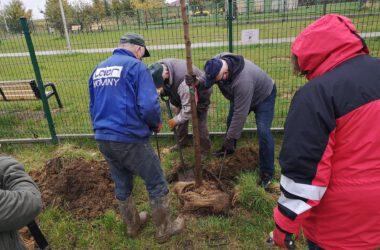 Robotnicy pomagający sadzić drzewko