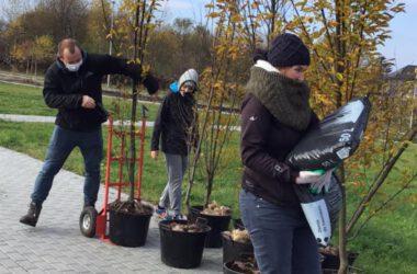 Sadzenie drzewa - grupa młodzieży w trakcie sadzenia drzewek