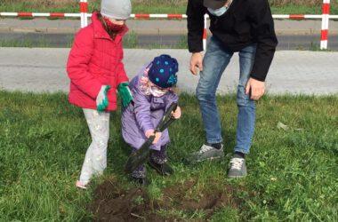 Sadzenie drzewa - małe dzieci zajęte kopaniem dołków pod zasadzenie drzewa