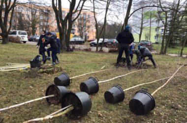 Zielone Płuca Miasta - Strzybnica - leżące drzewka przed zasadzeniem