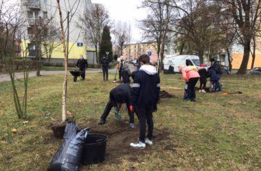 Zielone Płuca Miasta - Strzybnica - sadzenie drzewek