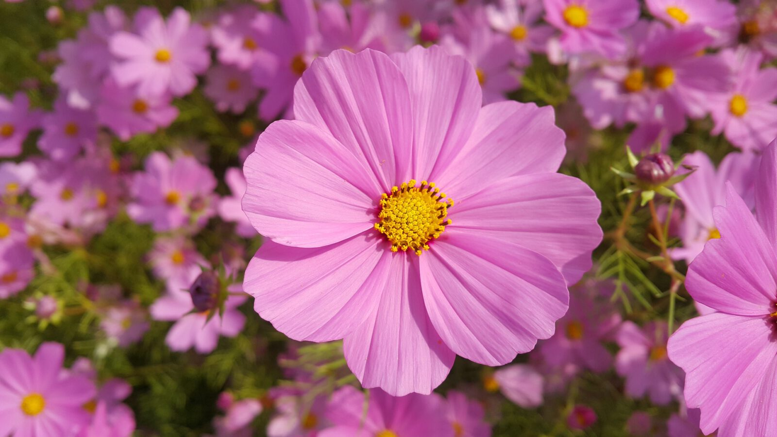 Zdjęcie kwiatka