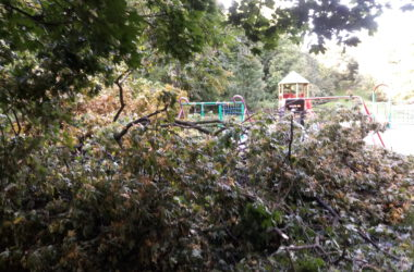 Połamane drzewo w Parku Miejskim
