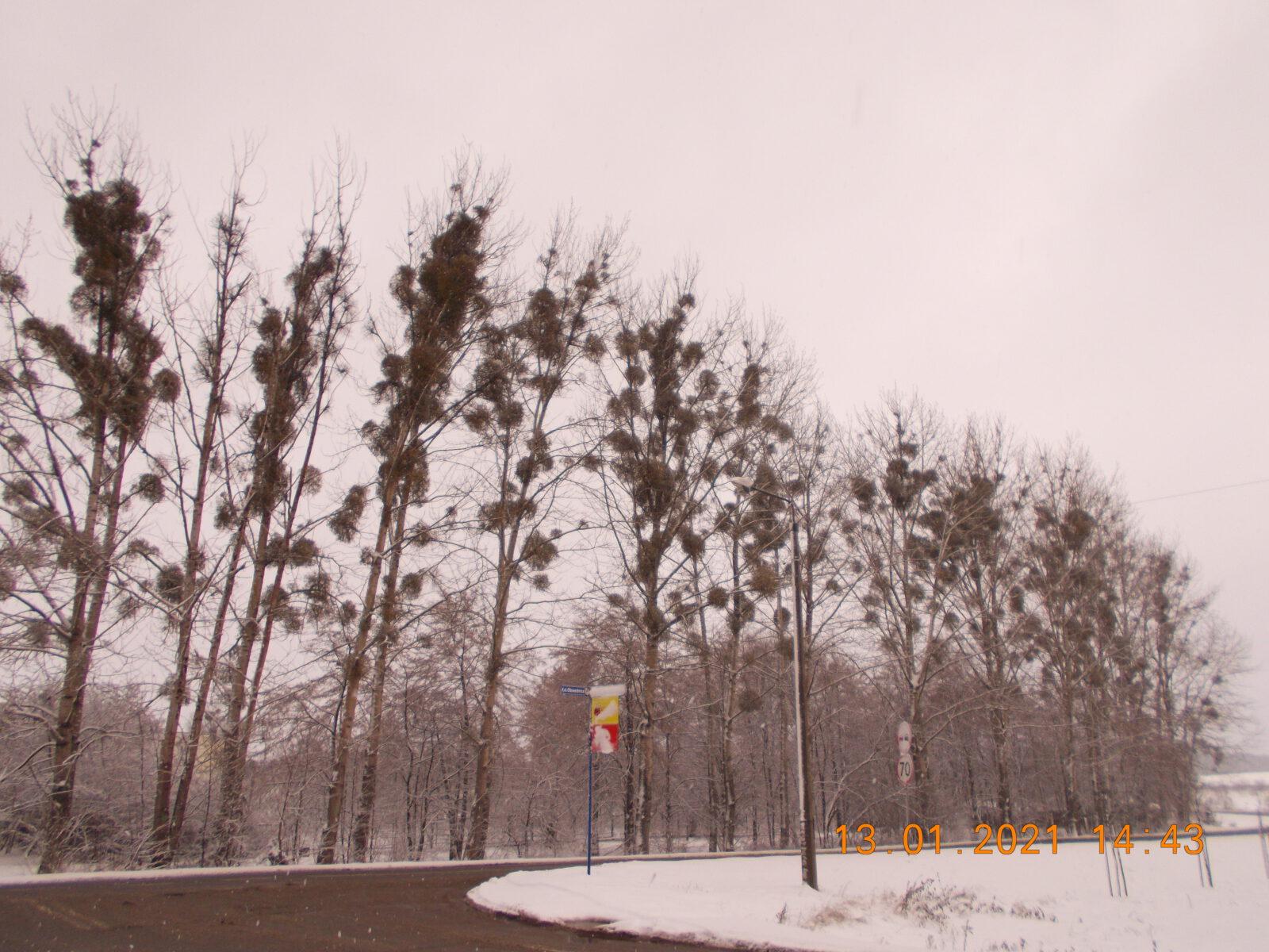 Zimowa sceneria. Śnieg, drzewa