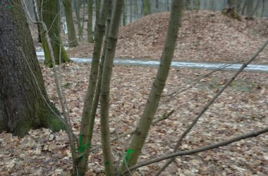 Chore drzewa w Parku Miejskim