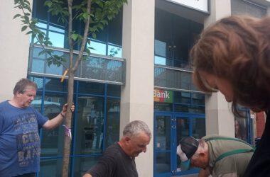 Mężczyzna trzymający drzewo do nasadzenia i dwóch mężczyzn kopiących dziurę