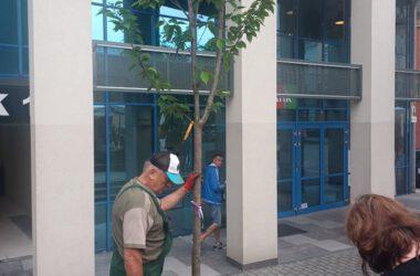 Mężczyzna w roboczym ubraniu trzymający drzewo do nasadzenia