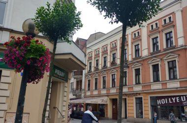 Dwa świeżo posadzone drzewa na Placu Wolności, widok na ulicę Krakowską