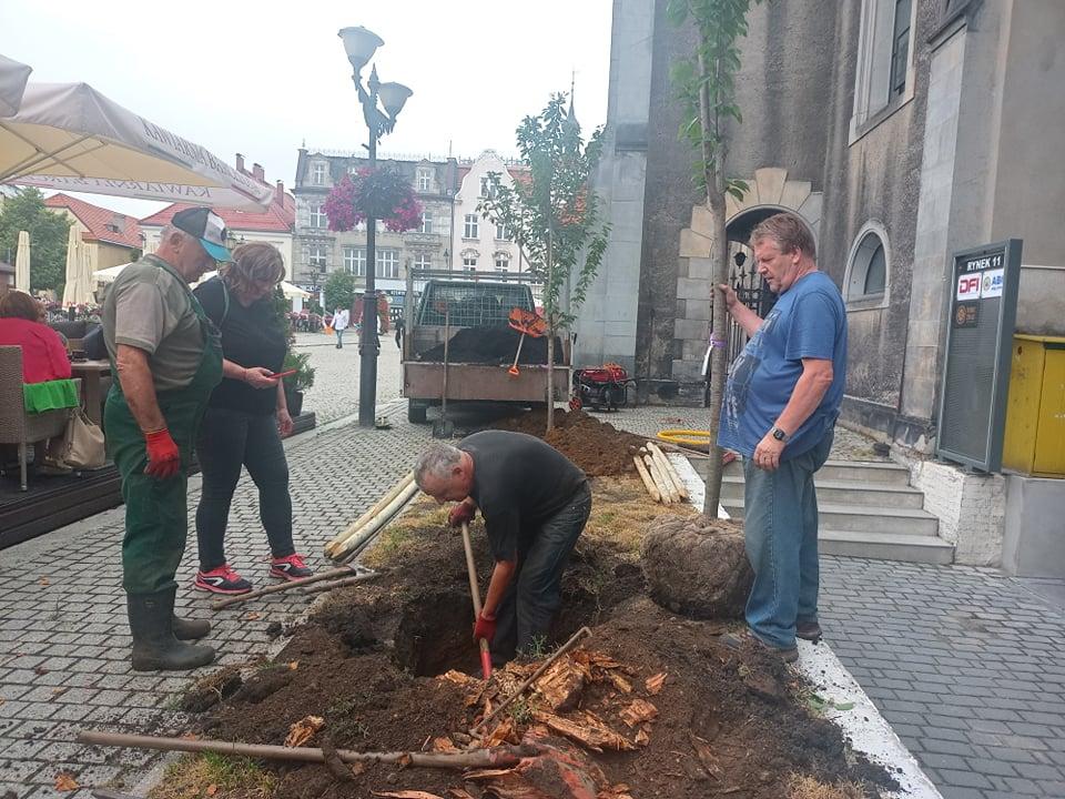 Mężczyzna kopiący dziurę pod drzewo, mężczyzna trzymający drzewo i kobieta z mężczyzną przyglądający się