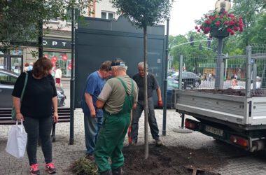 Cztery osoby na Placu Wolności z świeżo posadzonym drzewem